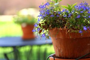 12 Things You Need To Know Before Repotting A Plant