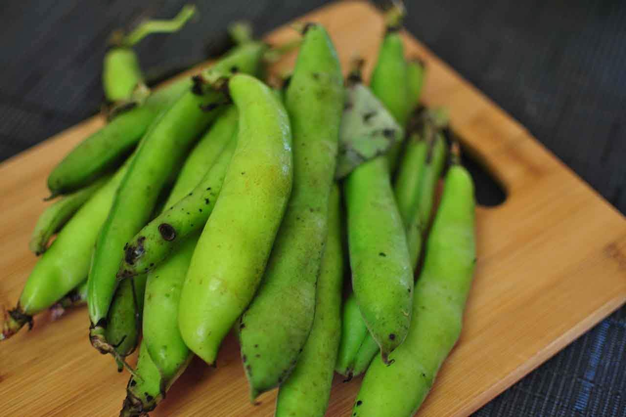 Fava Bean Cure For Parkinson's Disease