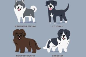 These Illustrations Show The Origins Of Dog Breeds In The Cutest Way Possible